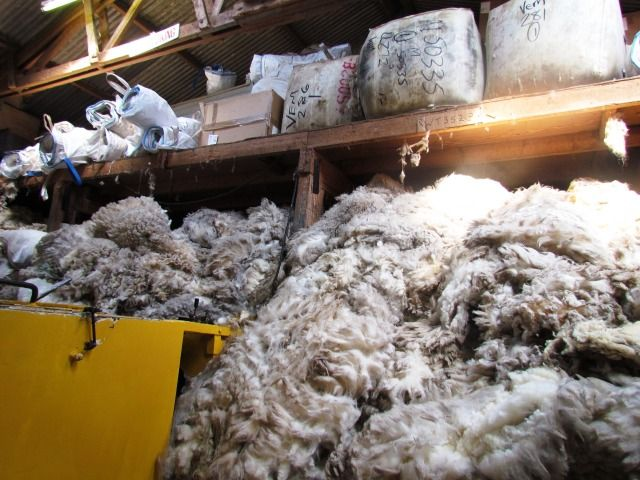 shetland fleeces