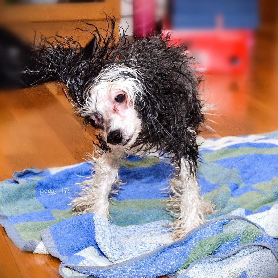 Ahh I Love A Good Shake After Bath Sweet Dreams My Friends