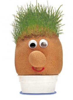 Why not grow your own Mr Grasshead Grass seed is mixed