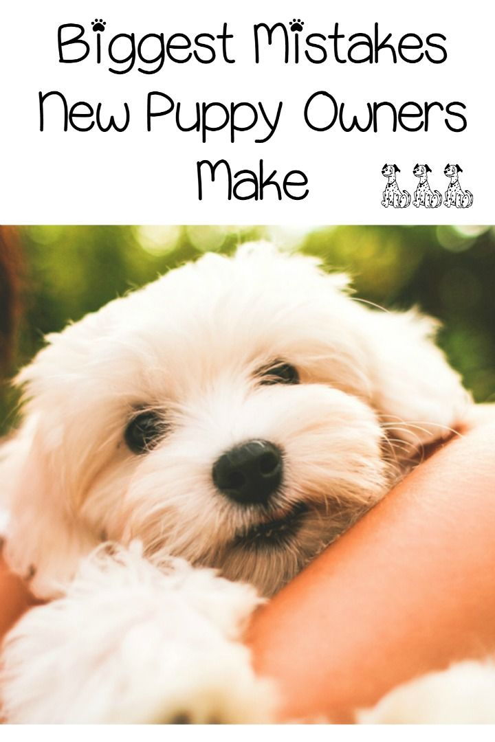 5 Biggest Mistakes New Puppy Owners Make Bear Harvey New Puppy