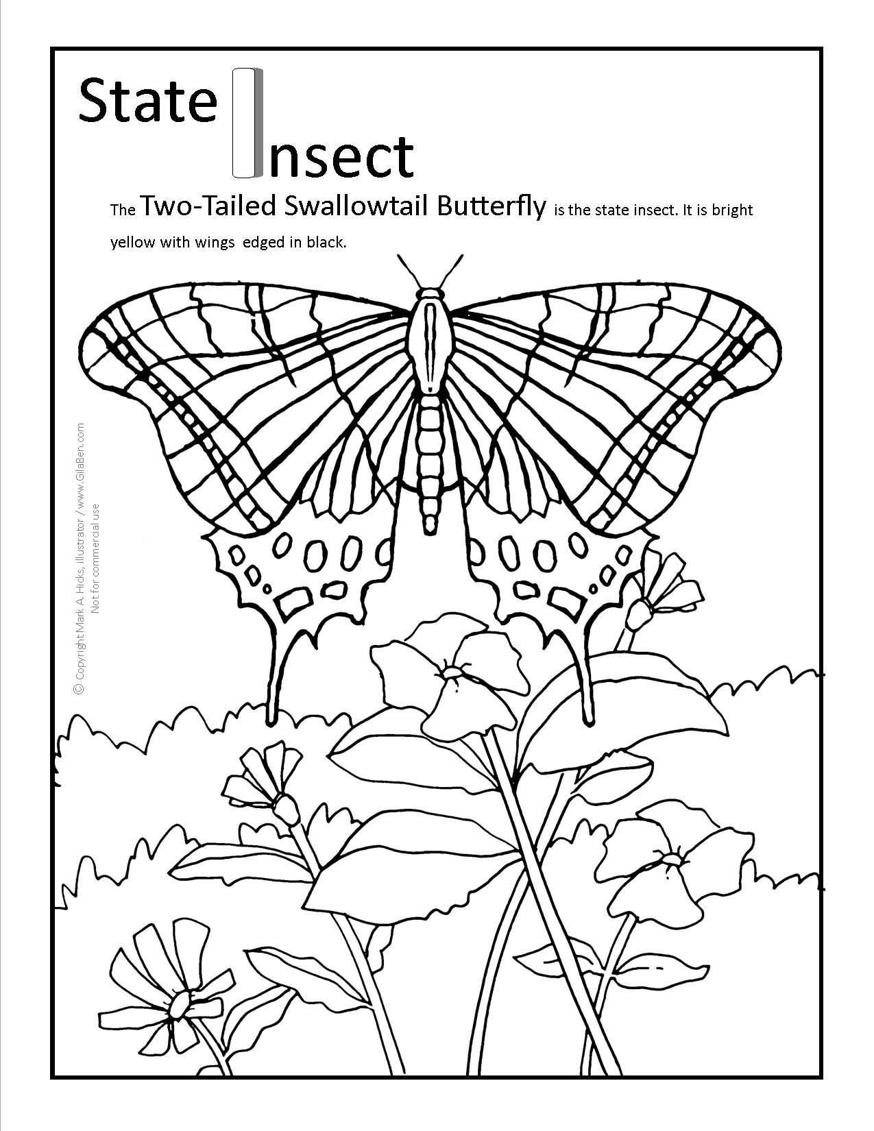 Butterfly coloring page symmetry - Arizona Coloring Pages To Download Or Print The Arizona State Butterfly Coloring Page Pdf