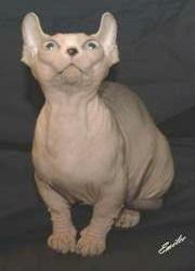 The Dwelf Cat A Dwarf Cat Breed The Dwelf Cat Is Still Under