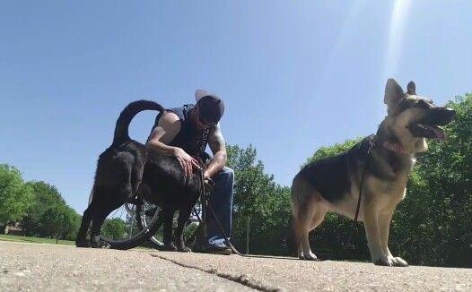 Ryan Petersen Head Dog Behavior Specialist Obedience
