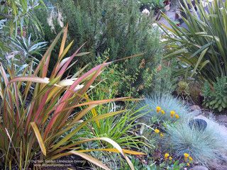 Phormium Companion Plants Landscape Services Rock Garden Plants