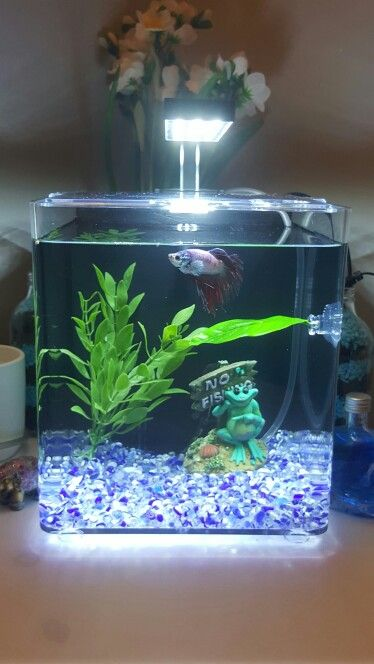 betta cube aquarium for my japanese fighter fish   bruce  bruce u0027s tank is equipped with an aqua one air pump and a zoomed betta bed leaf hammock  betta cube aquarium for my japanese fighter fish   bruce  bruce u0027s      rh   pinterest