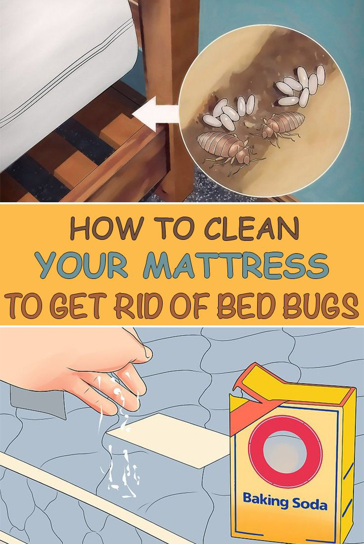 How To Clean Your Mattress To Get Rid Of Bed Bugs Rid Of Bed