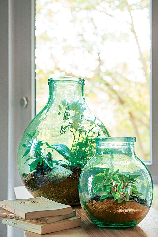 Green Lab Truffaut Les Terrariums Ont La Cote Verre Recycle Jardinerie Truffaut Vase Verre