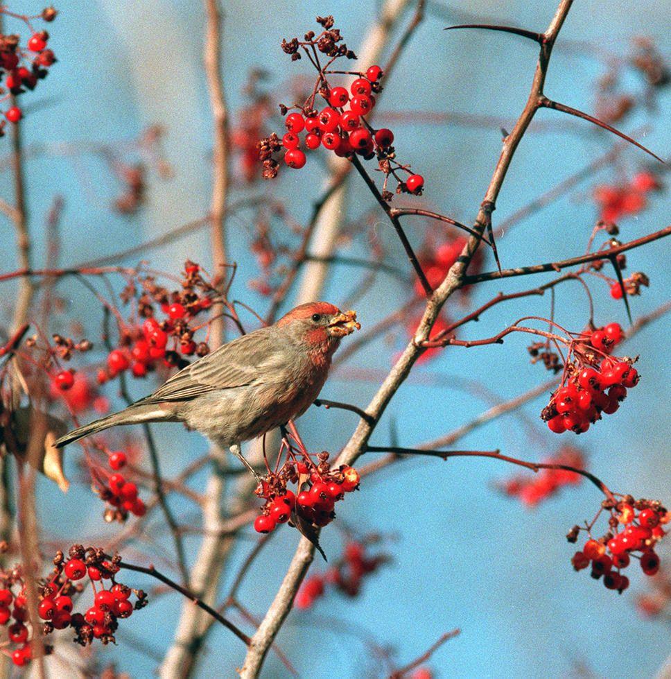 13+ Backyard Birds Salt Lake City PNG - HomeLooker