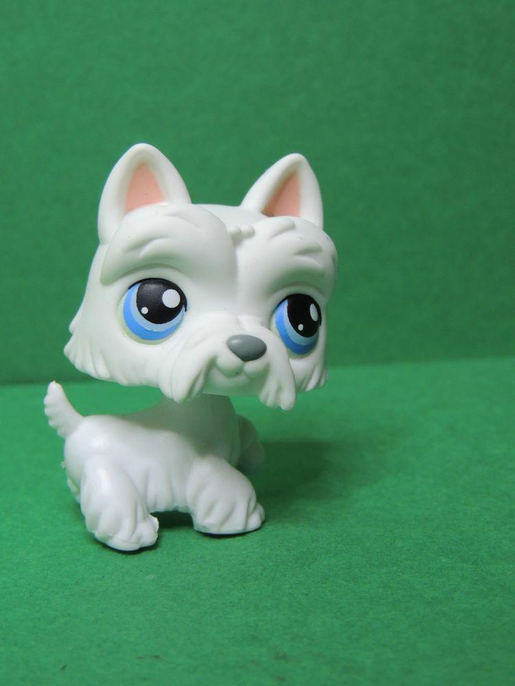 24 chien scottie dog white westie blue eyes lps littlest - Chien pet shop ...