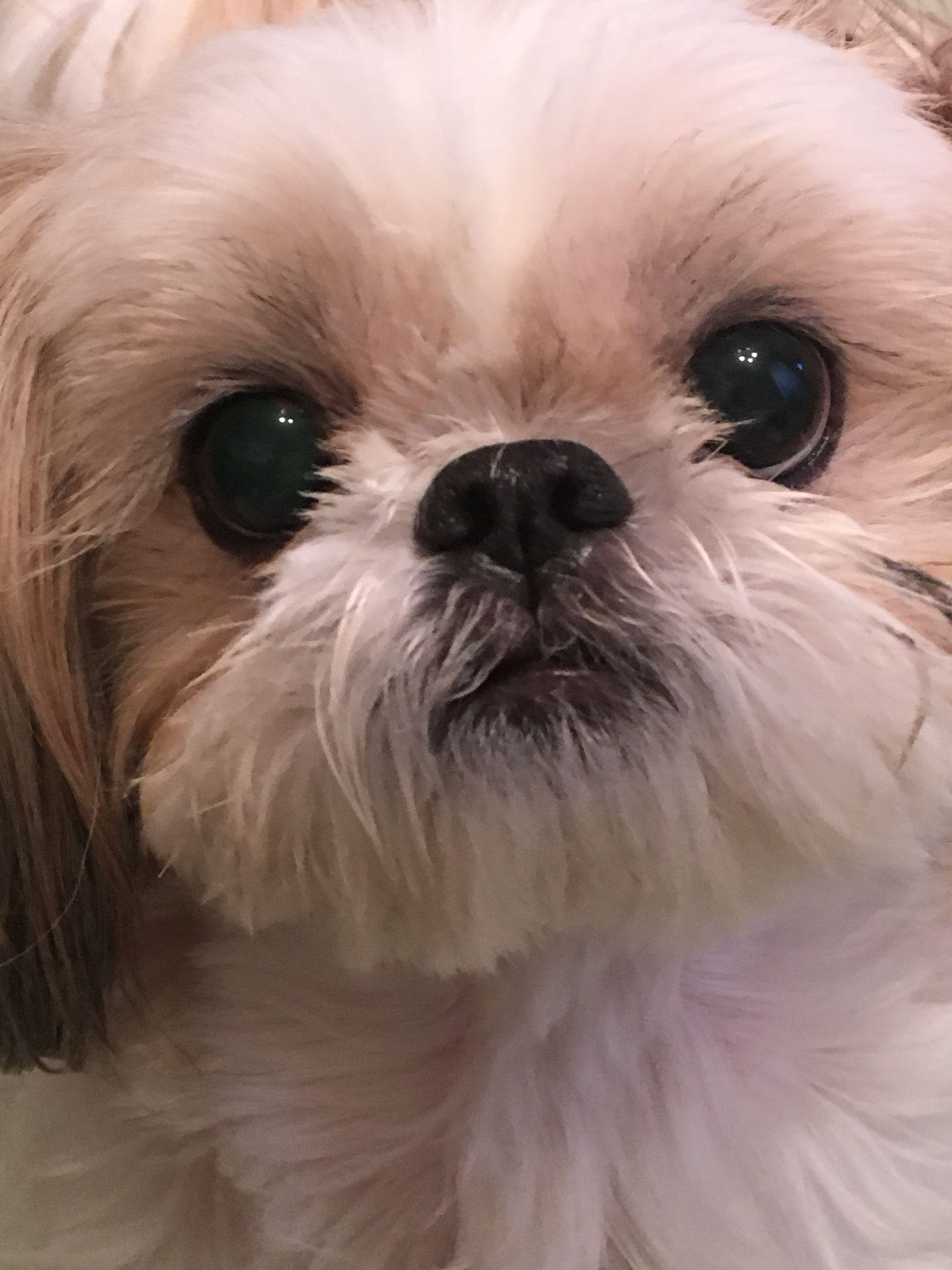 ドアップで可愛さを激写 kids pinterest dogs puppies and pets