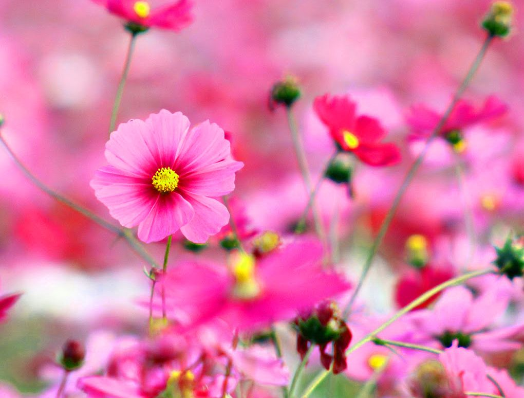 Beautiful Dp Wallpaper Hd Download Beautiful Dp Beautiful Dp For Flower Whatsapp For Beautiful Dp Whatsapp Dp Images Flower Images Nature Images
