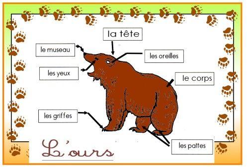 Corps de l 39 ours sciences - Petit ours brun va al ecole ...