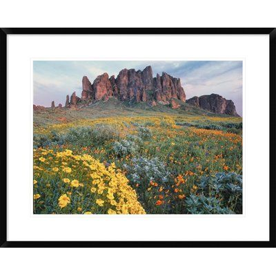 Global Gallery California Brittlebush Lost Dutchman State Park, Superstition Mountains, Arizona by Tim Fitzharris Framed Photographic Print Size: 2...