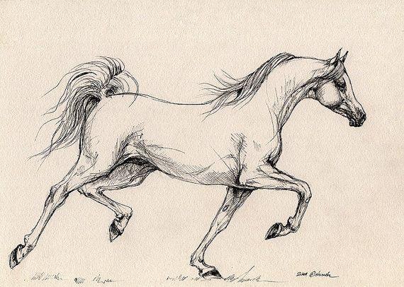 Running Grey Arabian Horse Equine Art Equestrian Original Pen