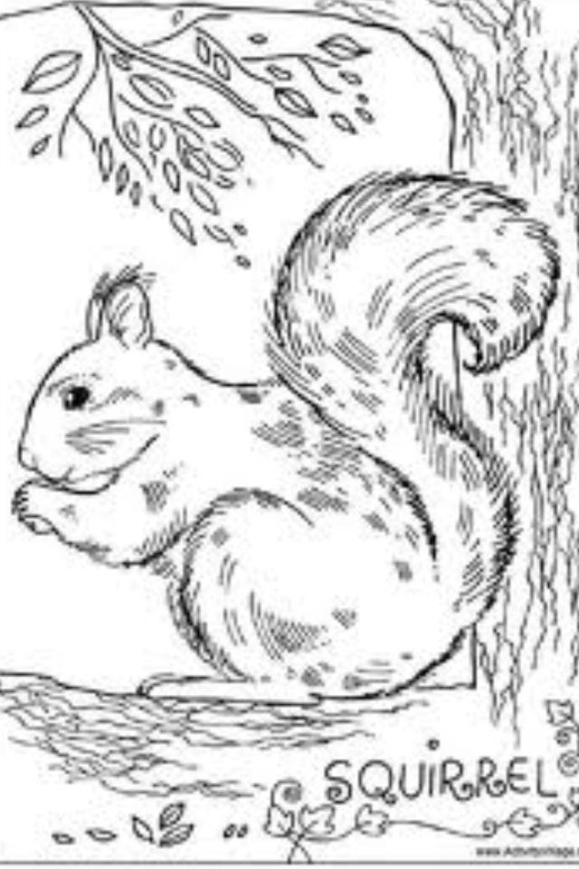 Pin By Nyoka Sanders On Art : Drawing Squirrel Coloring Page, Colouring  Pages, Coloring Pages