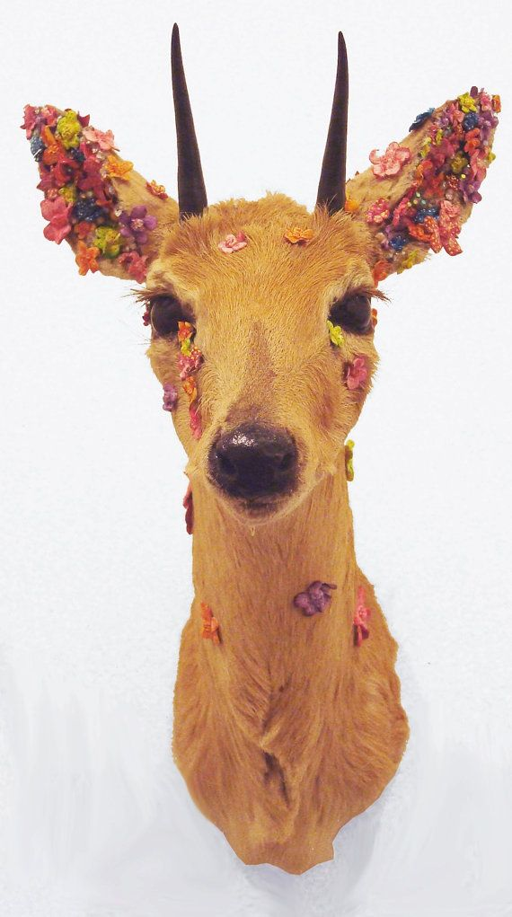 Blooming Floral Duiker Taxidermy Mount by DivyaTaxidermy on Etsy, $900.00