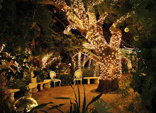 Lights in trees for weddings skint in the city living the high wrapping fairy lights around trees for an outdoor wedding can create a magical space aloadofball Gallery