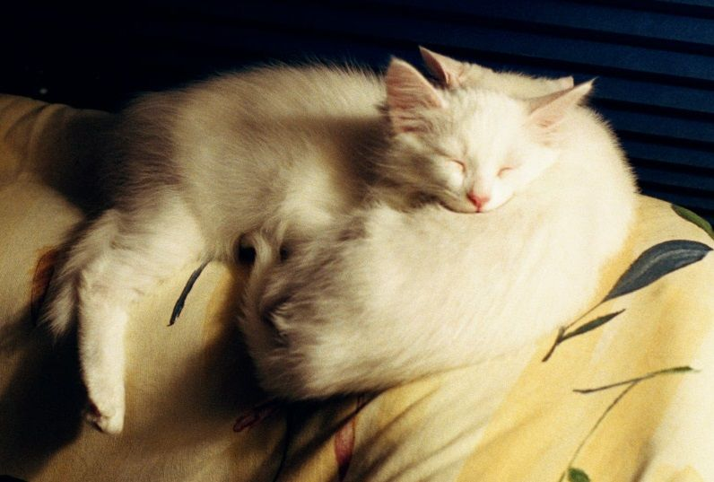 Sebastian and Viola - twins born on Feb. 29.