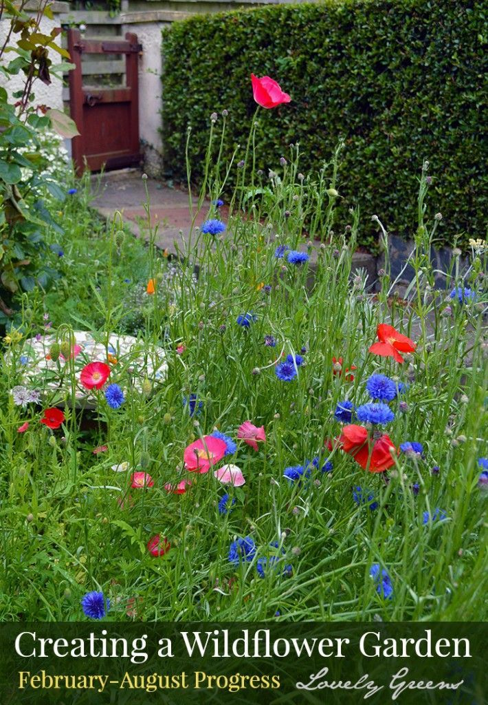 How To Grow A Wildflower Cottage Garden Wildflower Garden Beautiful Flowers Garden Flower Garden Design