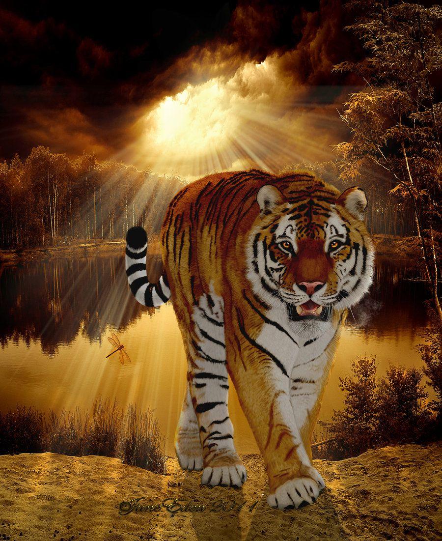 tiger king - photo #38