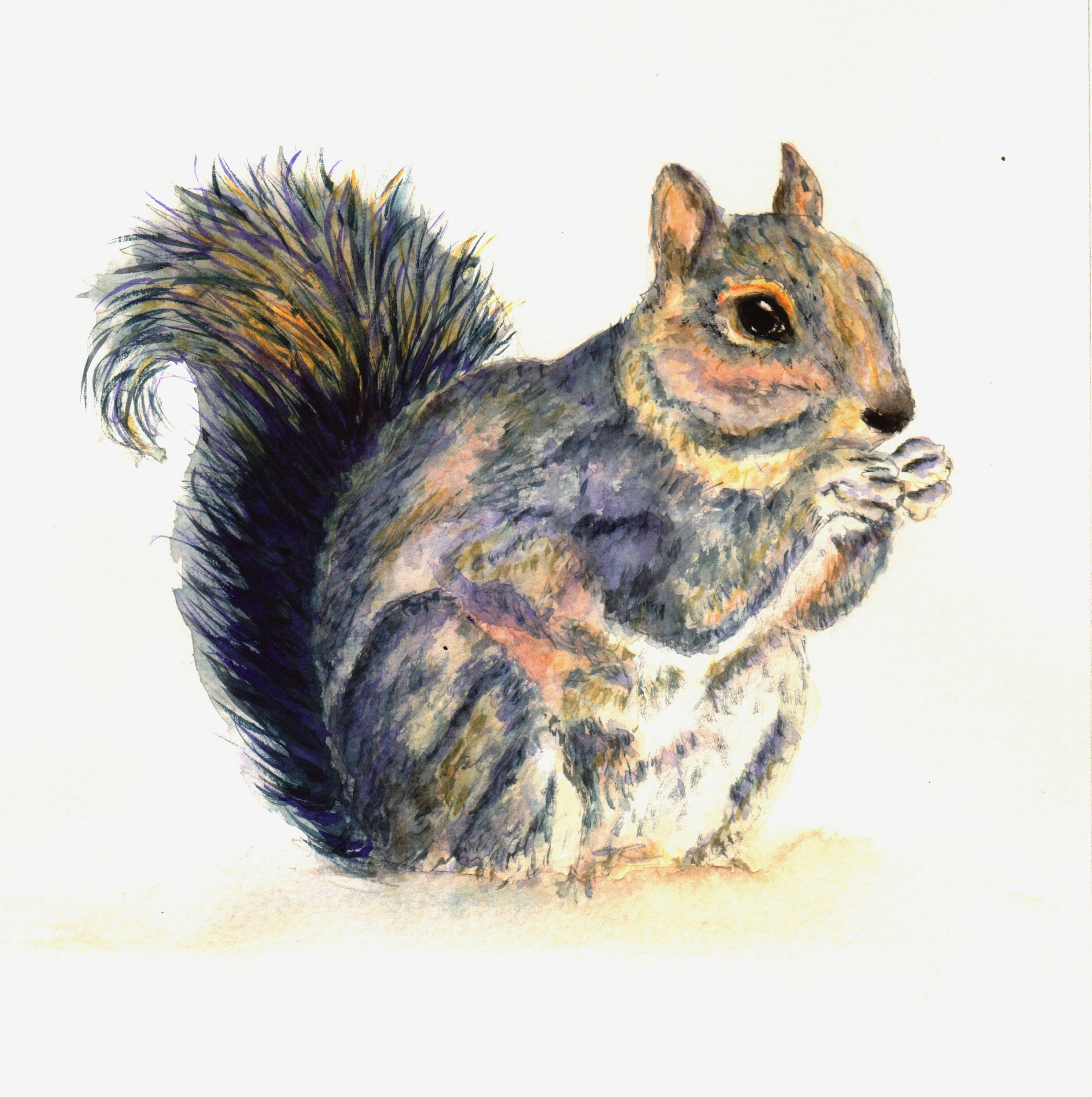 Squirrel Nutkin - An Original Funky Watercolour Painting of a Squirrel. Ideal Unique, Fun, Art Gift for Nature or Animal Lover