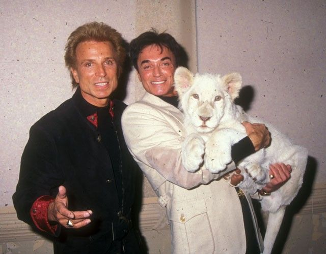Top 5 Worst Animal Attacks On Celebs Animal Attack The