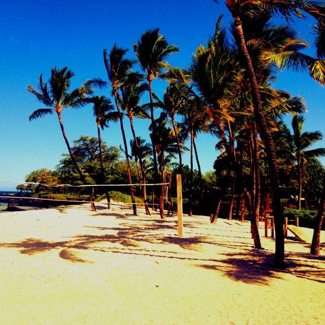 Hawaii Beach Volleyball Palm Trees Sand Paradise