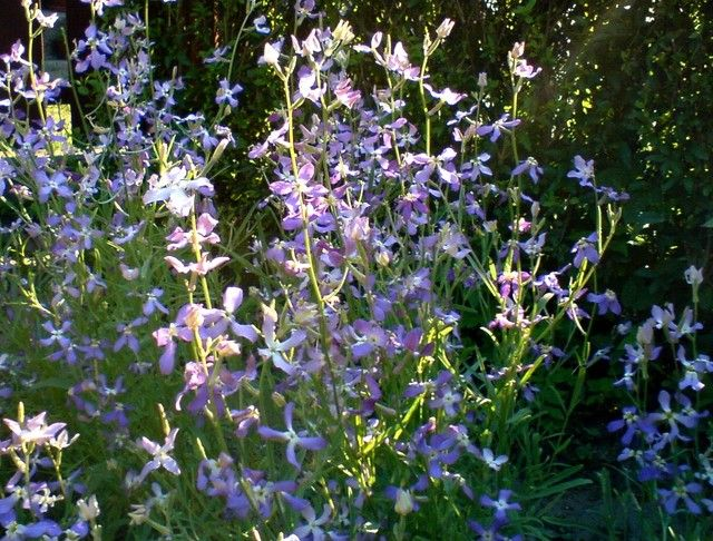 Maciejka Flower Garden Plants Home And Garden