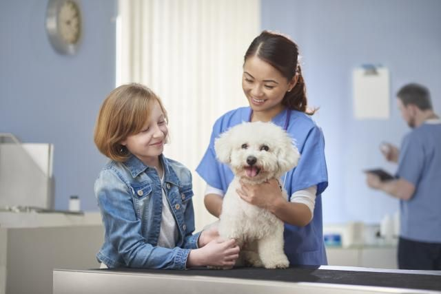 Discover The Pros And Cons Of Being A Veterinary Technician