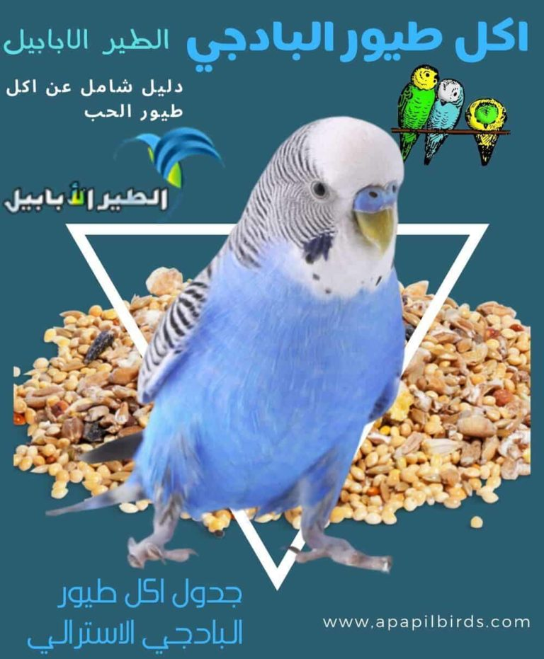اكل طيور البادجي بتكلفة بسيطة جدا اكل طيور الحب الطير الأبابيل In 2020 Animals Parrot Bird