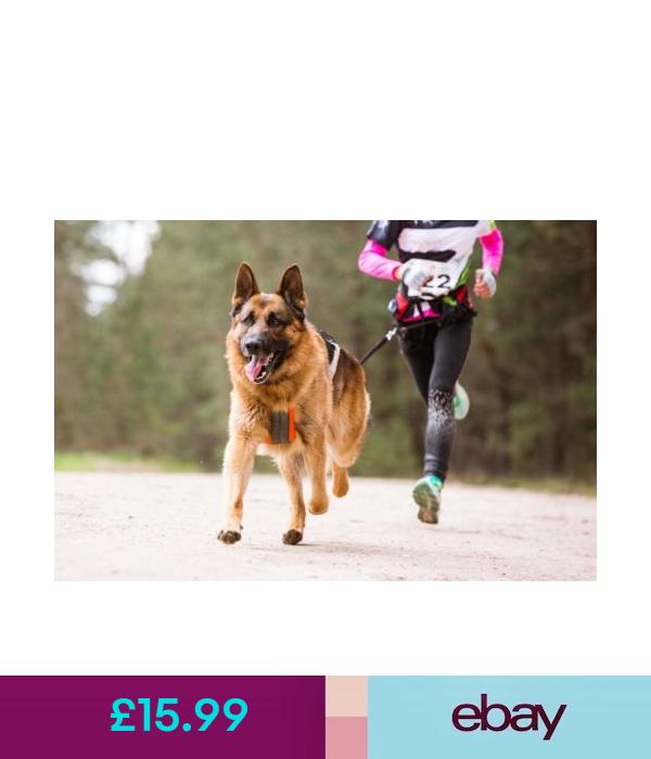 L J Pets Uk Leads Head Collars Ebay Home Garden With Images Dog Runs Dog Leash Hands Free Dog Leash