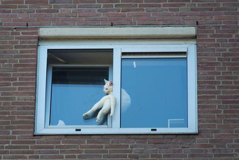 Beklemde Heemsteedse kat gered van achtste verdieping flat. Foto's Michel van Bergen