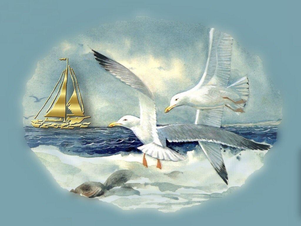решил открытки с чайками исследования вскоре
