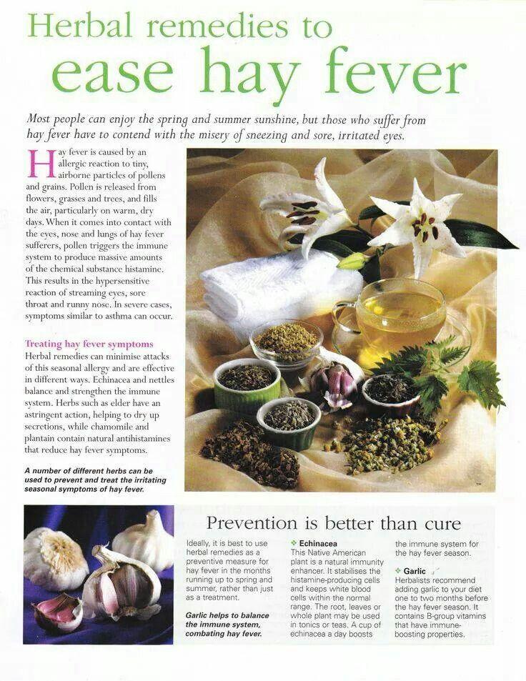 Herbs For Hay Fever Www Helensjourney Com Herbalmedicine Naturalliving Naturalmedicine Herbs Naturalremedies Hay Herbalism Herbal Remedies Herbal Healing