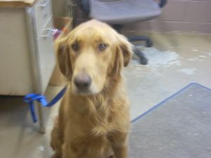 Adopt 4 Stray Avail 5 31 2 3 Yrs On Adoptable Pets Dog