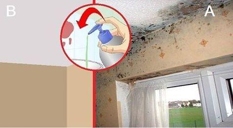 comment supprimer la moisissure des murs les murs de votre maison reviendront comme neufs. Black Bedroom Furniture Sets. Home Design Ideas