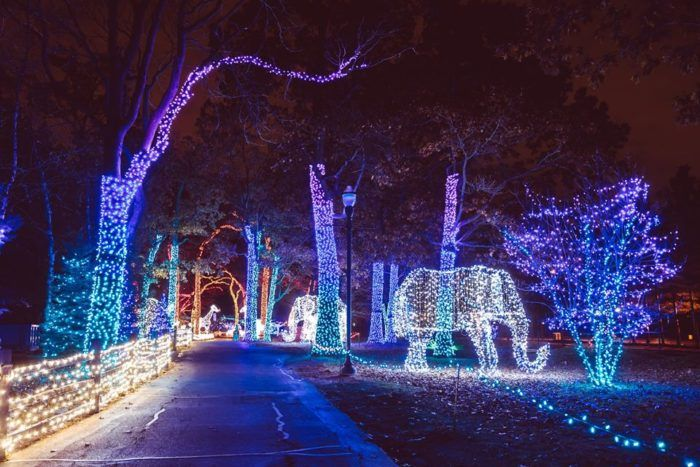 Detroit Zoo Christmas Lights.8 Wild Lights At The Detroit Zoo 8450 W 10 Mile Rd Royal