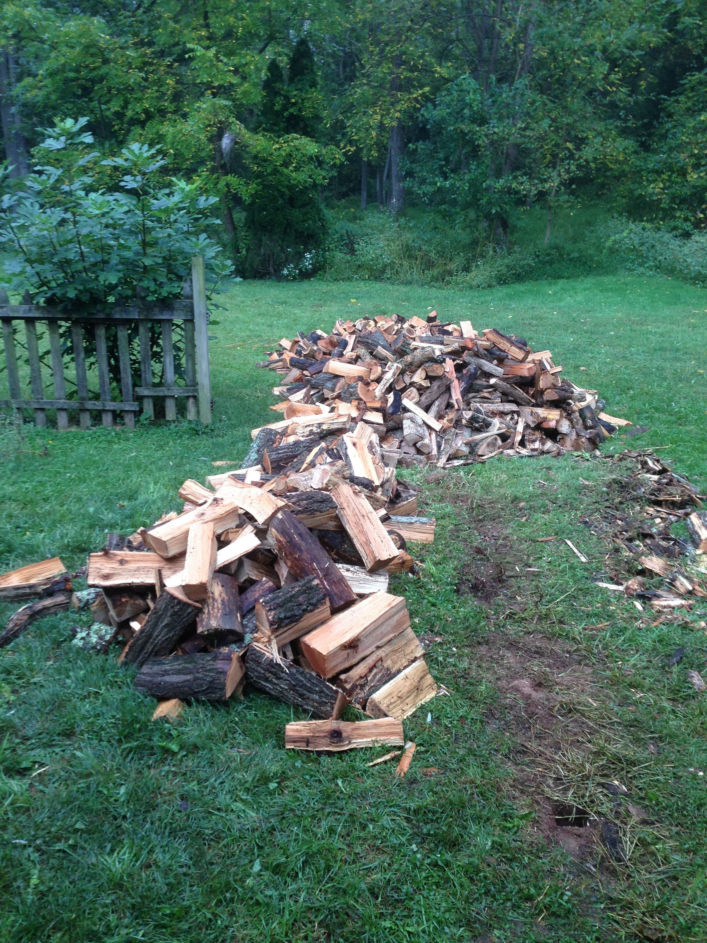 Second day of the winter woodpile project. Now the proposed fence line is exposed; fence goes up in 3 more days.