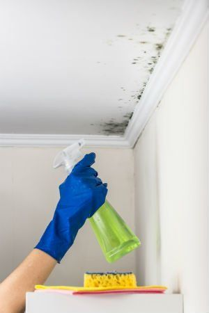 Solved! What to Do About Mold on the Walls