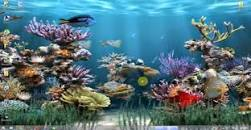 خلفيات متحركة للكمبيوتر كبيرة Recherche Google Fish Background Fish Wallpaper Backgrounds Desktop