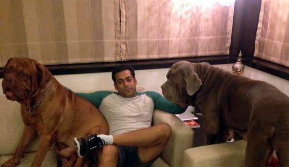 Salman S Dog Aamir S Kitten Alia S Cat B Town Pet Pals See