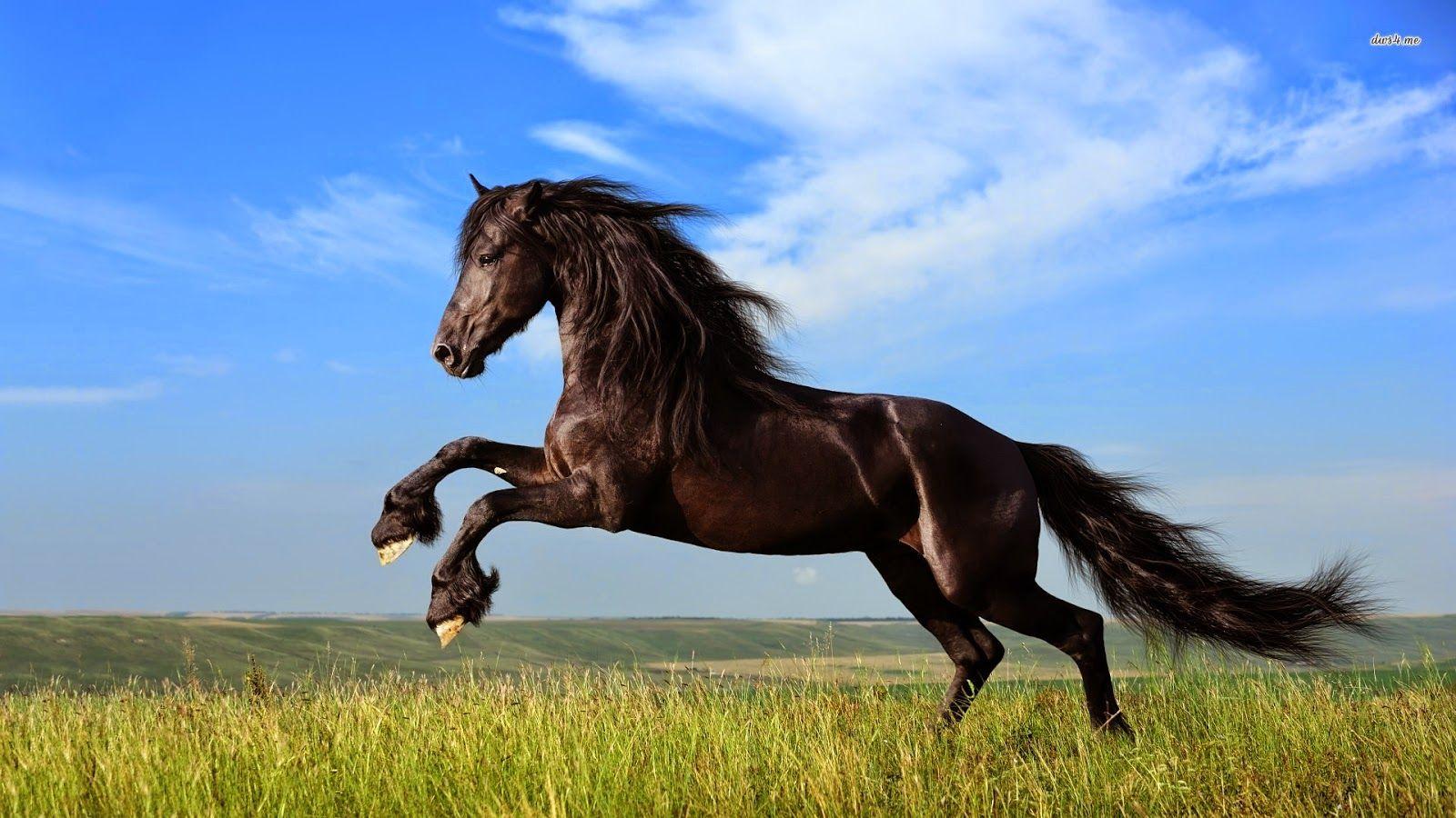 Wonderful Wallpaper Horse Creative - 5d978494eef3c0c3a41c3d139ab7a5a5  HD_913081.jpg