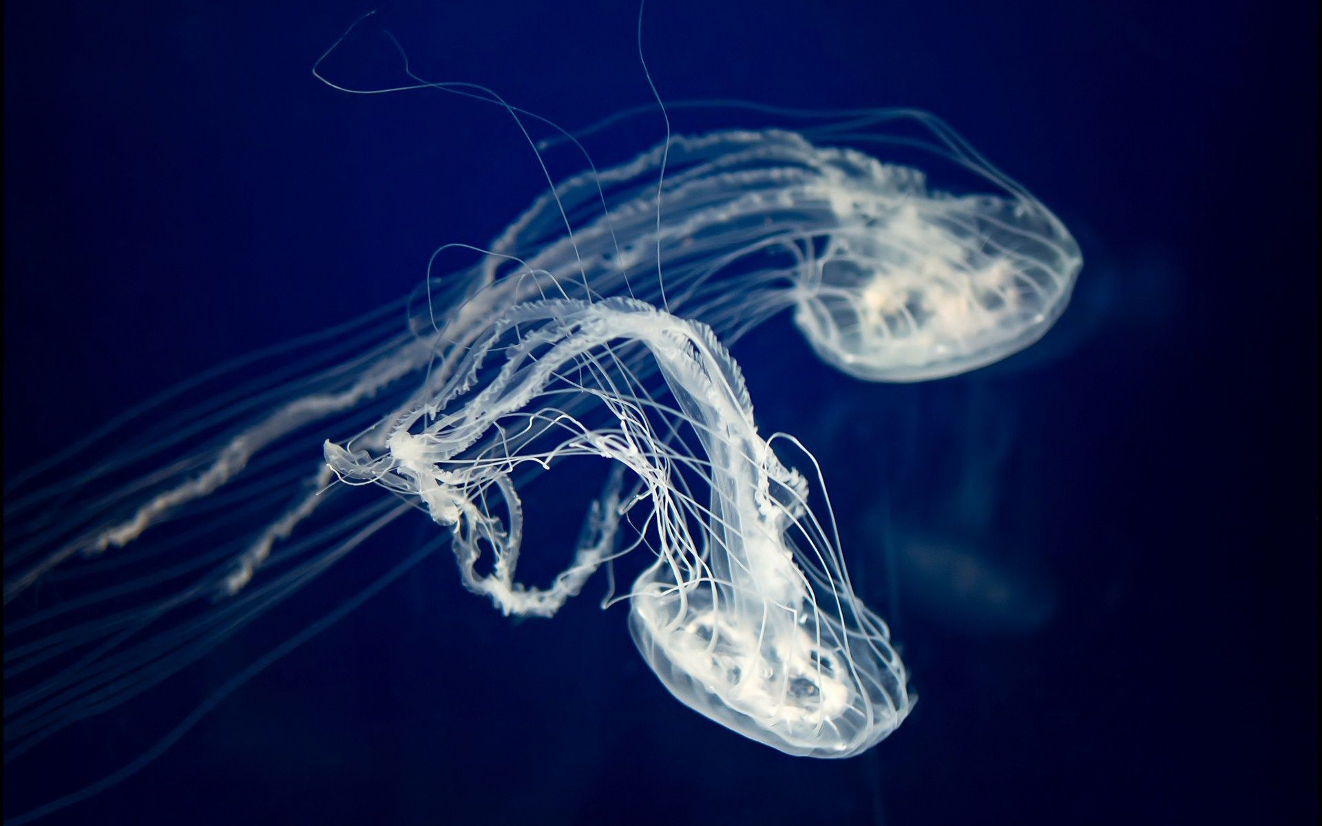 jellyfish wallpapers hd download 1920a—1080 jellyfish wallpapers 51 wallpapers adorable wallpapers