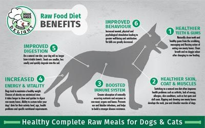 Check out the healthy benefits of putting your dog on raw diet check out the healthy benefits of putting your dog on raw diet forumfinder Image collections