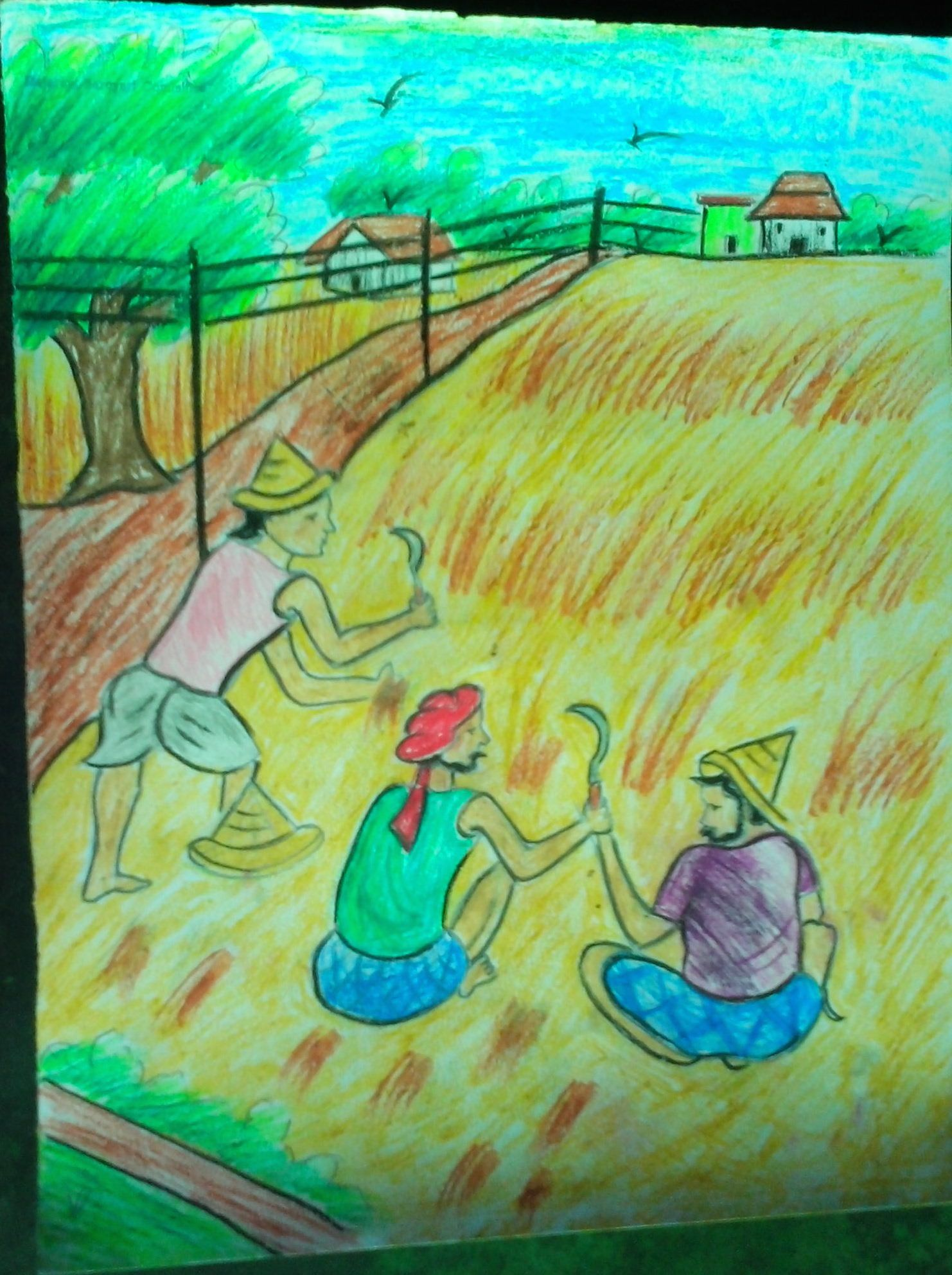 Paddy field farmer painting photo watercolor painting drawings paintings watercolor ink sketch pencil illustration graphicdesign graphics