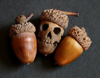 skull acorn No Tutorial but use a skull Template to make it  use a Dremel drill to make the face google online for a skull template or jack o lantern template Have a ton of acorns laying around outside and I thought I would do something with them. This would be perfect for the season and the Halloween spirit.