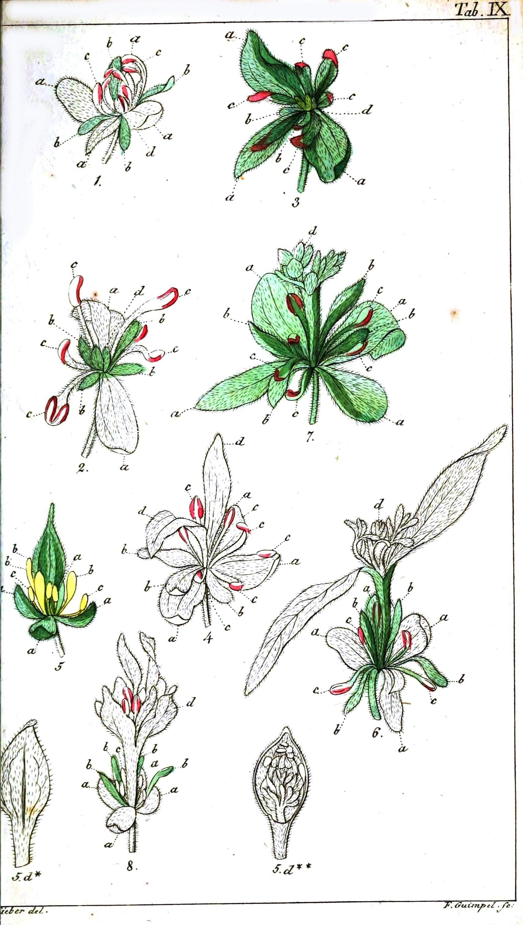 Pin By Emily Hopkins On Pins Needles Pinterest Botanical