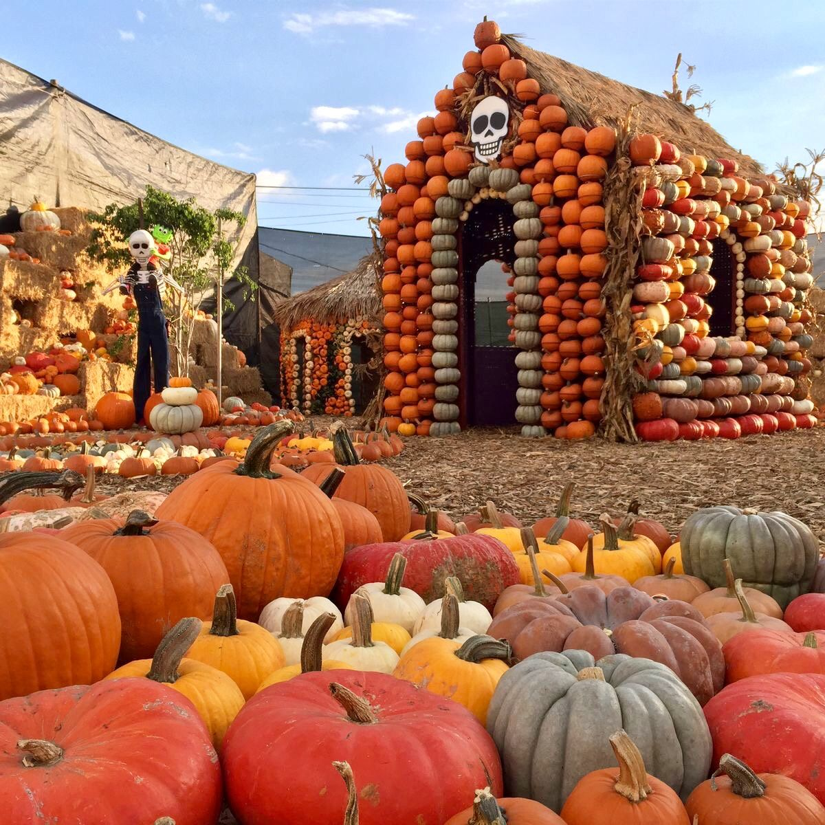 Pin by Lydiae on OCTOBER LOVIN' Best pumpkin patches