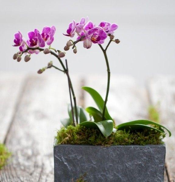 Dekoration Der Innenräume Und Gärten Mit Orchidee Blüht, Ist Eine Gute Idee  Zu Füllen Räume, Die Sie Entspannt Und Fühle Mich U2026