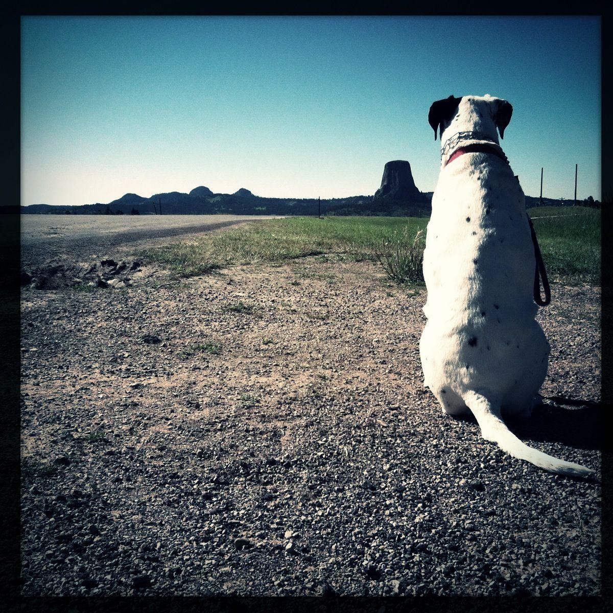 #devilstower #closeencountersofthethirdkind #howiebeane #dalmatian #dog